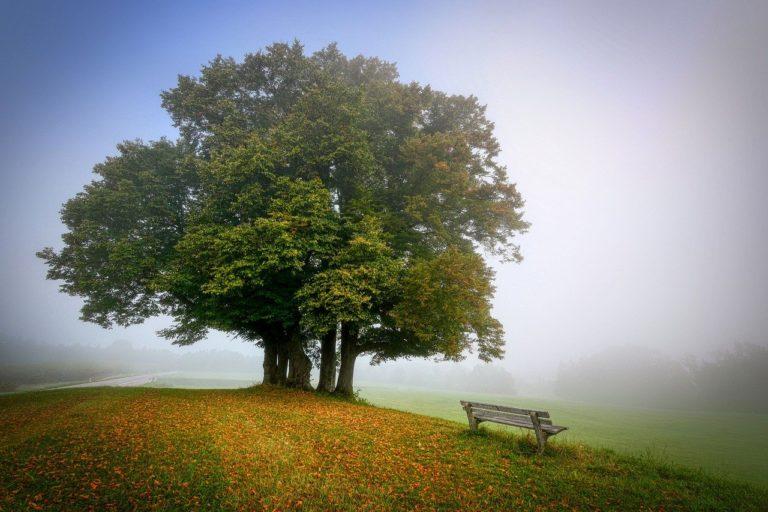 landscape, tree, bench