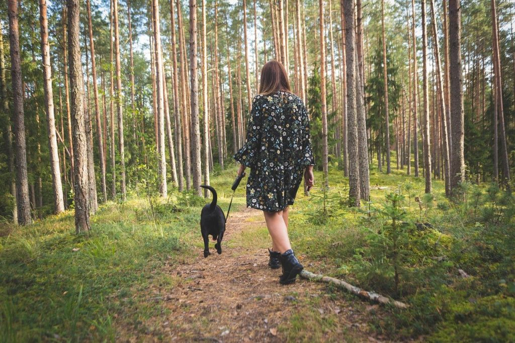 dog, nature, forest