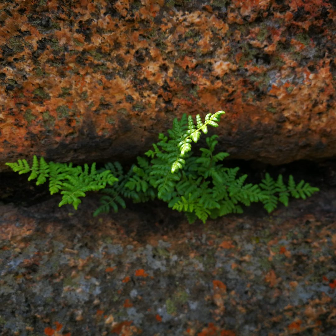 resilience-growing-from-within-LBGBW4T